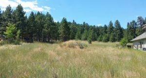 6769 Bristle Cone Court Lolo, Montana 59847 MLS# 21606409