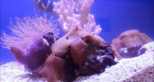 Bristle Worms Spawning in Aquarium